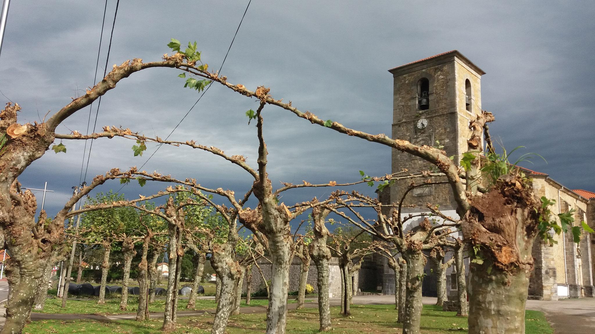 Poda de otoño en la iglesia de Solórzano
